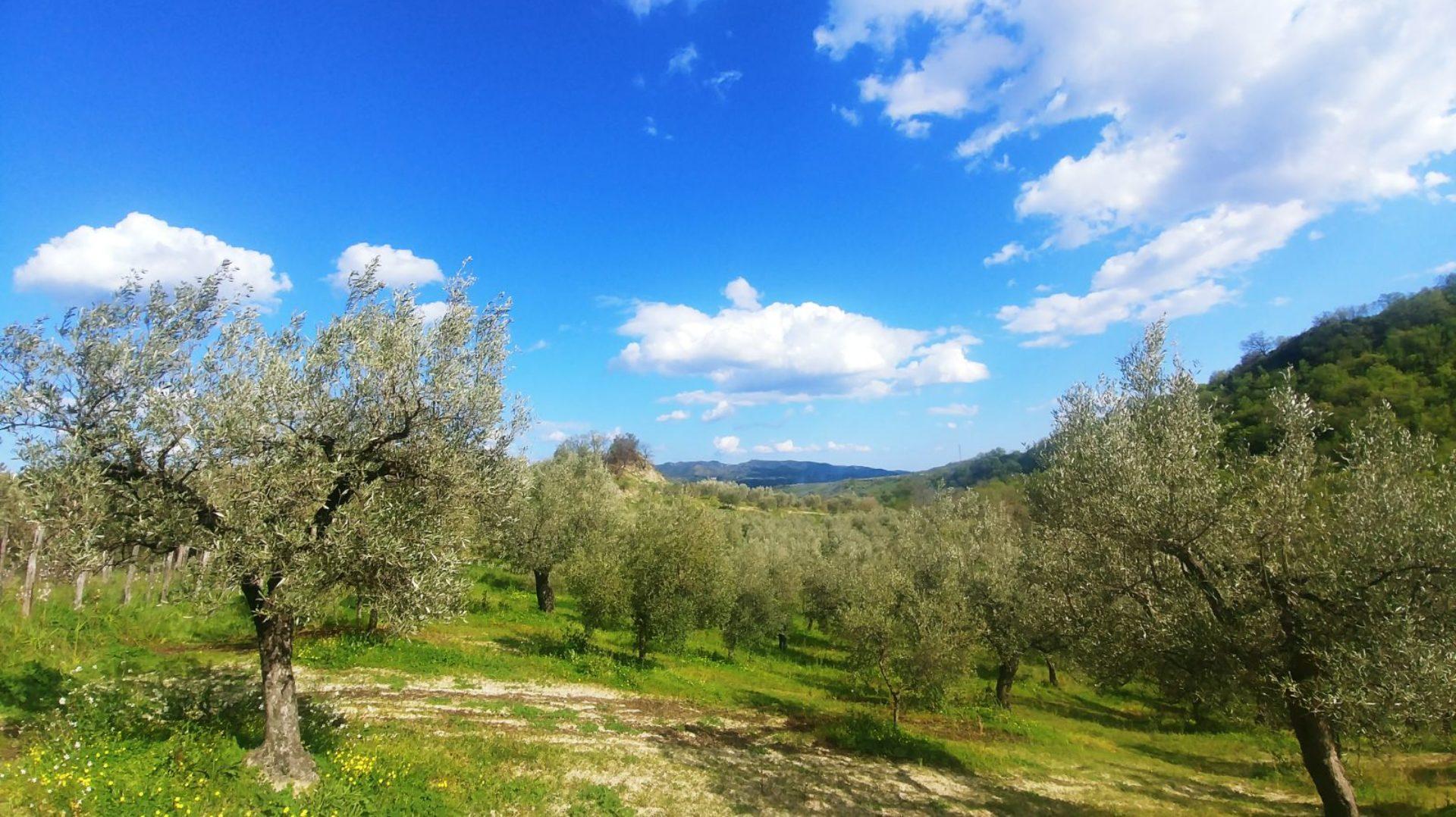 Oleificio Mediterraneo
